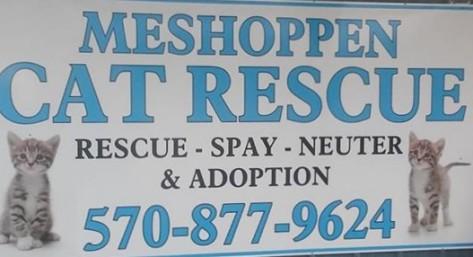 meshoppe cat resuce
